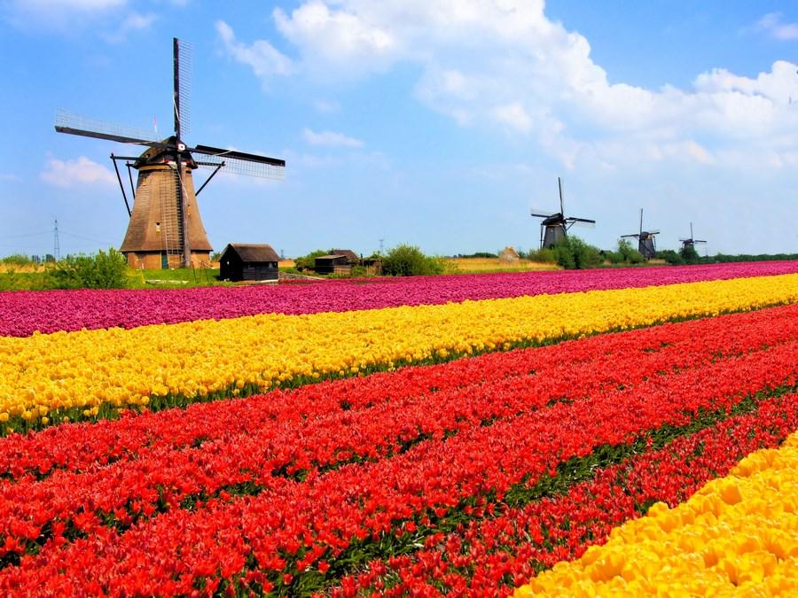 Por qué ir a Holanda con tu e-commerce es tu mejor apuesta